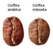 Unterschied Arabic Robusta
